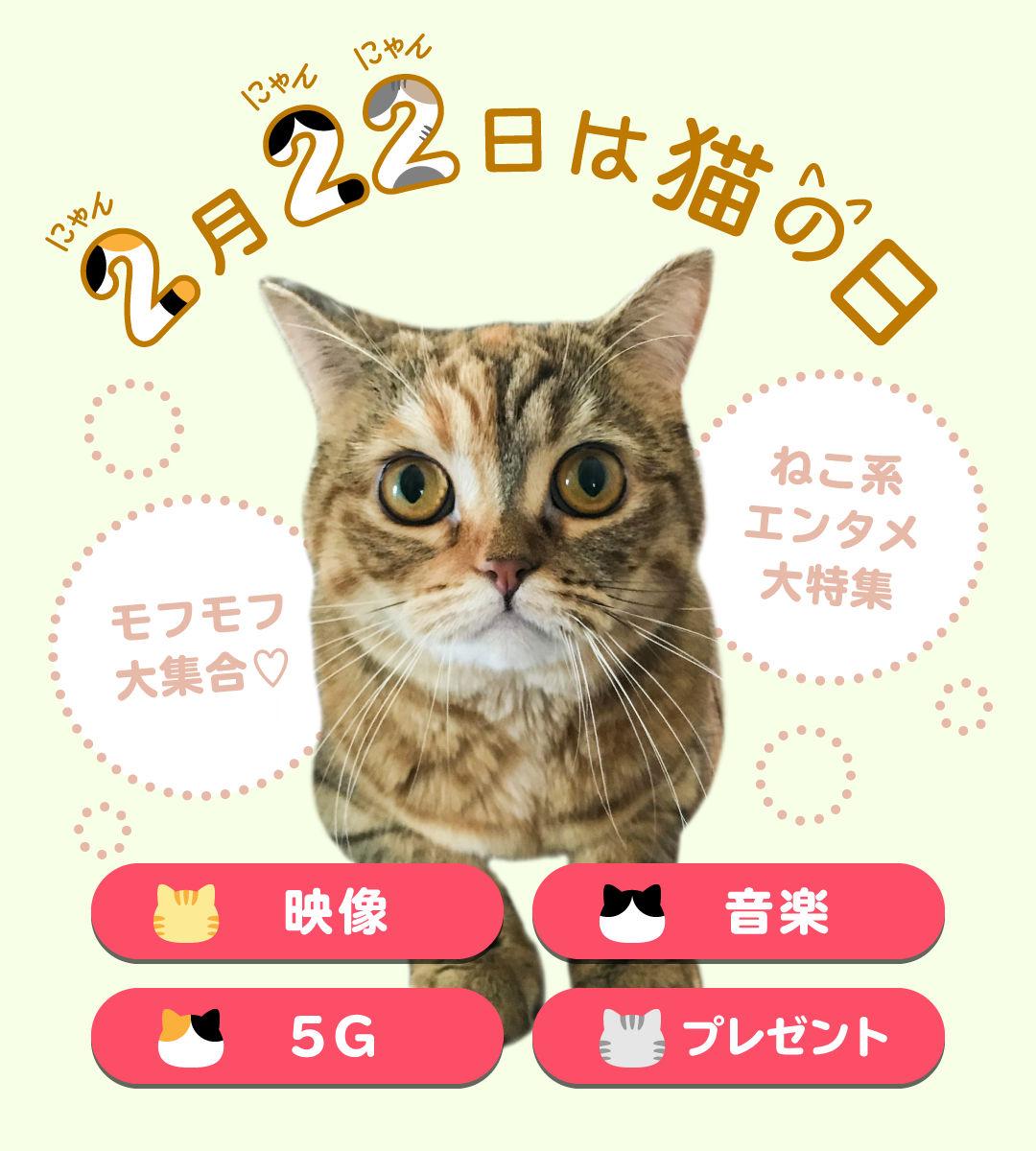 2月22日は猫の日! 猫が主役?!のエンタメ大特集|【エンタメ特集】au ...